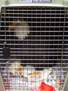 eagle in crate